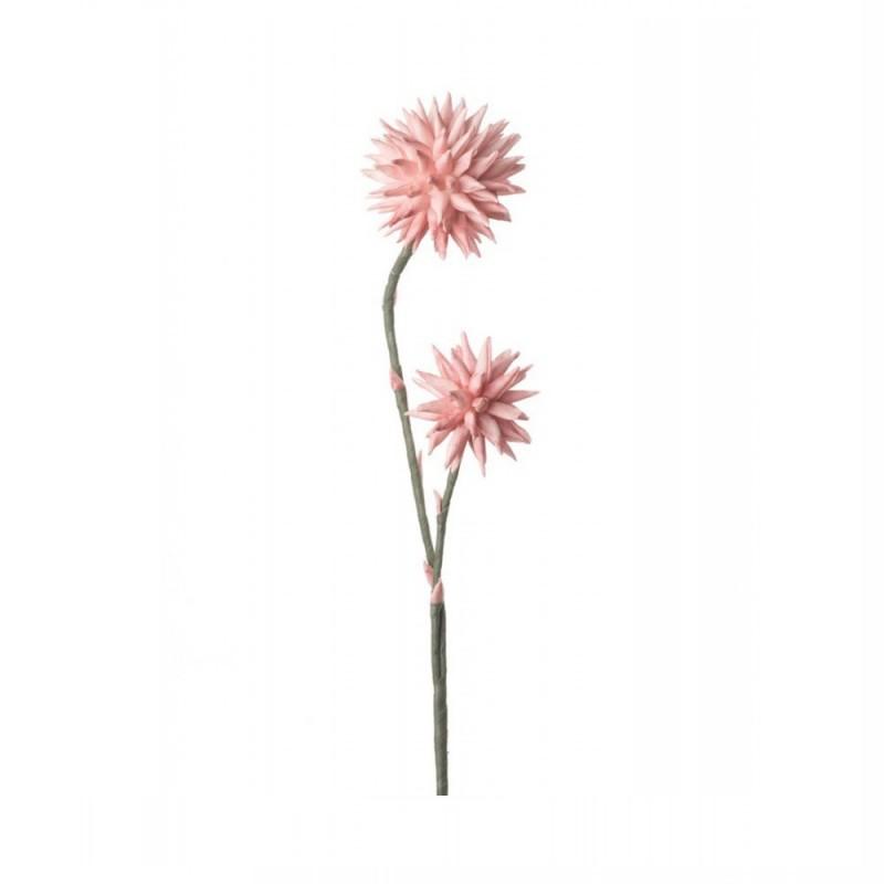 L'Oca Nera - Crisantemo Pompon